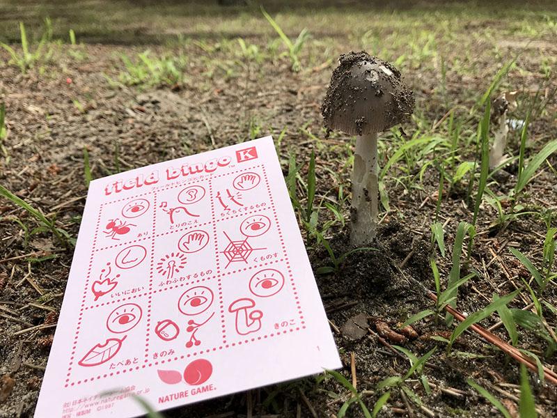 メイン写真:ドン山でネイチャーゲーム