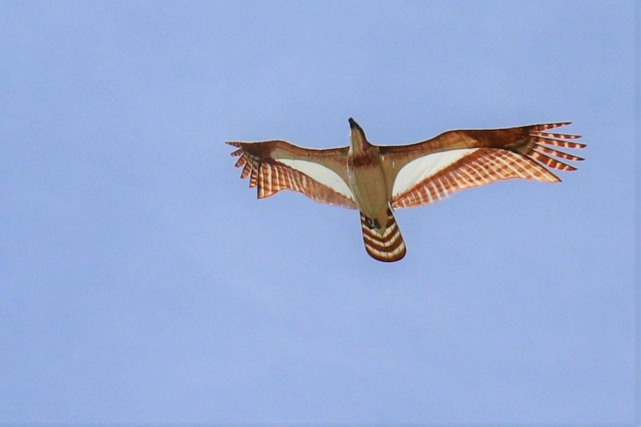 写真2:こども凧づくり教室